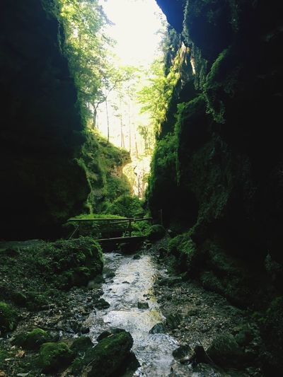 Marienklamm im Sommer Wandern Hiking Mountain Hiking River No People Forest Tranquil Scene Day Nature Beauty In Nature Tree Rock - Object Tranquility Outdoors Green Color Water Waterfall Plant