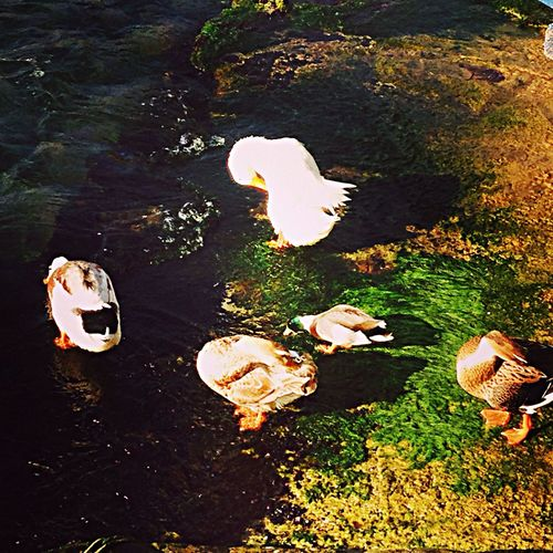 Ordekhil] Deniz Kenarı beykoz istanbul Manzara Ördek