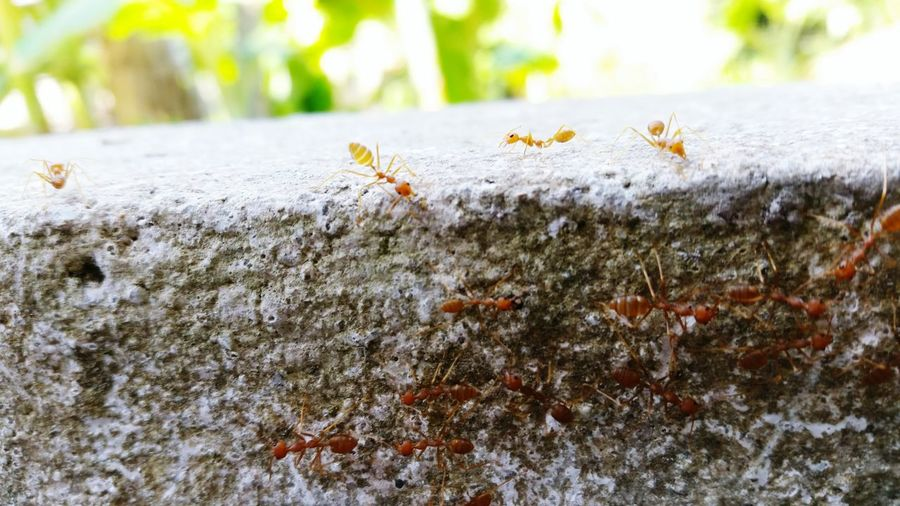 Nature of red ants Trying Something New Hungry Enjoying Life Hanging Out Hello World Nice Atmosphere Hi! Taking Photos Out Of Control Check This Out