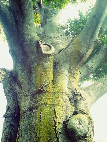 Mighty tree Enjoying Life