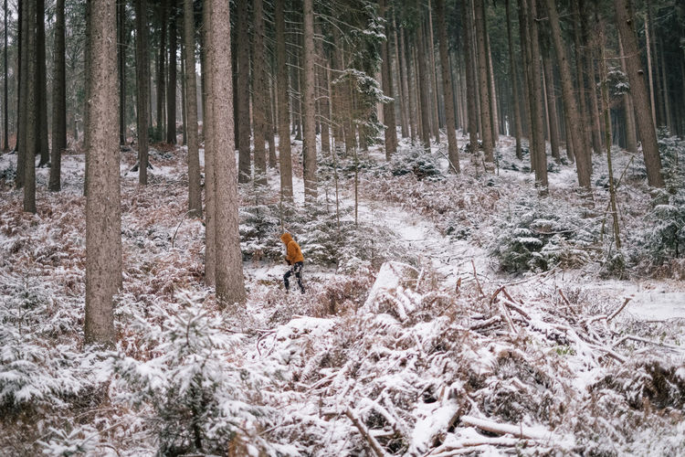 German forest covered with snow Snow Schnee Wald Germany Winter Cold Temperature Cold White Aerial View Drone
