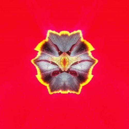 Немного цветочного минимализма. Macro tulip. Exploretocreate Freezfram воттакаявоттелега Instagram Instagramrussia Igmasters Top Photoforinspiration Topmasters Photographer Photo Natgeoru Peoplescreatives Aroundtheworld Artventurers Justophotoday Snapseed Vscocam VSCO Instaday Lugagram Mobilephotography World Mobilephoto I_love_lugansk lugansk_vsco minimalism_world flowers macro macrophotography