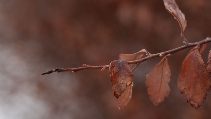 Close-up Close-up Natural Condition Plant Nature Twig Beauty In Nature Wilted Plant Autumn Branch Leaf