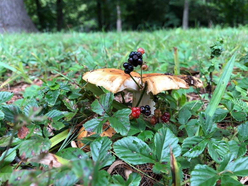 Berry Fruit Mushroom Animal Wildlife Invertebrate Plant Beauty In Nature Green Color