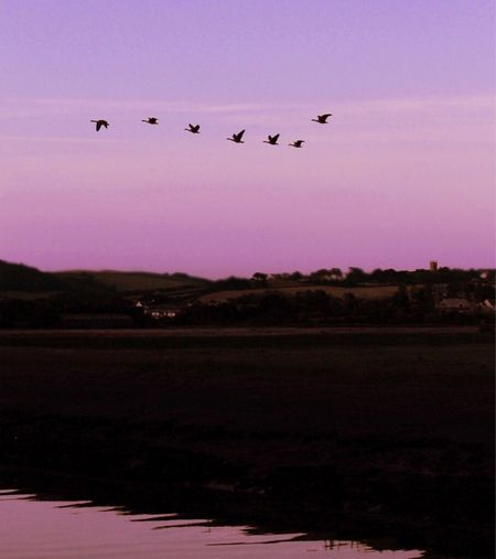 Flying West (v3) The last of 14, separate flights tonight. Sunset Silhouette Tranquility Landscape Dusk Romantic Sky Purple Sky Gaggle Of Geese Geese Flock Of Birds Village View Atmosphere
