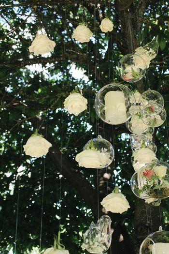 Wedding Decoration Tree Plant No People Low Angle View Lighting Equipment Decoration Nature Hanging Growth Outdoors Branch Close-up Green Color Sunlight Leaf