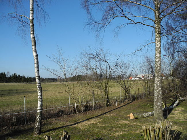 Sky Sunlight Tree Clear Sky Day Outdoors Nature No People Beauty In Nature Close-up Tree Trunk Field -in The Danish Countryside