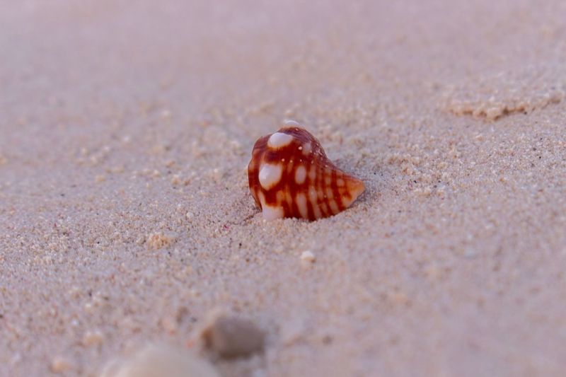 Close-up of a shell on sand