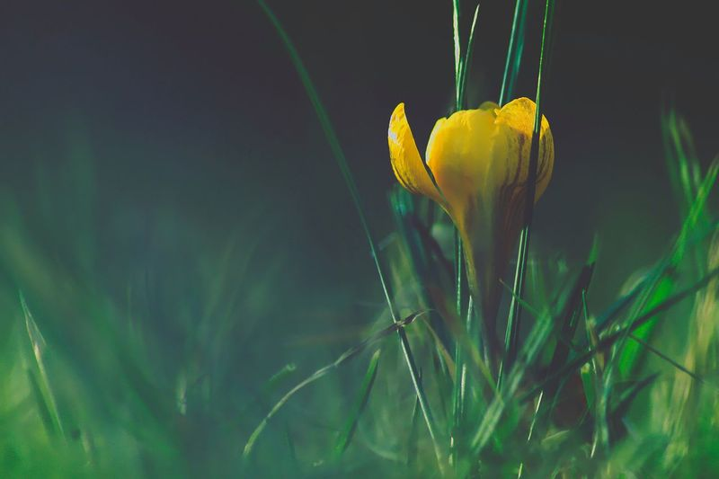 Plant Growth Beauty In Nature Nature Close-up Flower No People Focus On Foreground Green Color Yellow Flowering Plant