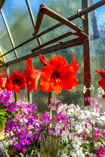 Flower Flowering Plant Plant Growth Beauty In Nature Close-up Freshness Vulnerability  Fragility Nature No People Flower Head Petal Day Tulip Hibiscus Flowers Pink Color Red Yellow Violet Orchid Hydrangea Blossom Sea Of Flowers Greenhouse Plants Plants And Flowers Hobby Exotic Botany Botanical Garden Park Tropical Glasshouse Cultivation Gardener Backgrounds Postcards Beauty In Nature Beautiful Earth Nature Watering Growth Floral
