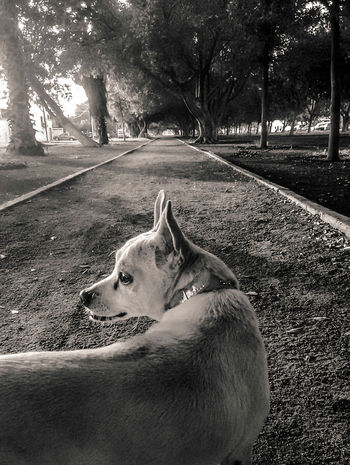Animal Themes One Animal Domestic Animals Pets Dog Outdoors Nature Blackandwhite Streetphotography Movil Movilephotography Mammal Tree Lying Down Close-up Day No People