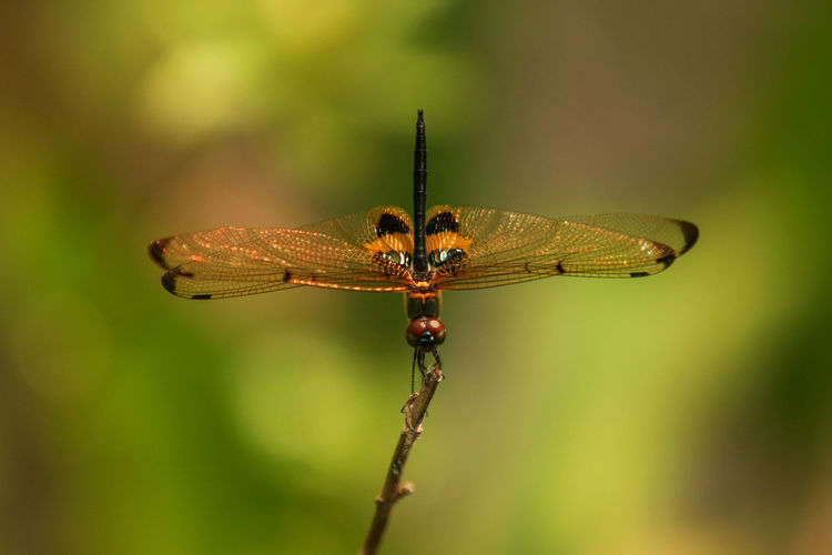Close-up of dragonfly on leaf