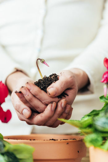 Human Hand Hand Holding Real People Midsection One Person Focus On Foreground Women Plant Human Body Part Nature Freshness Food Food And Drink Lifestyles Close-up Day Adult Vegetable Home Interior Copy Space Flowerpot People Young Adult Lifestyle Seeds Bio Eco Earth