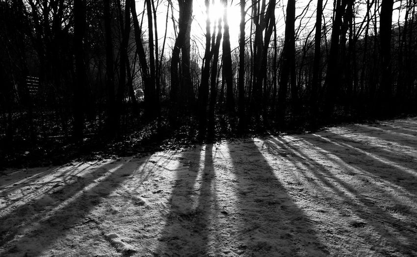Black And White Blackandwhite Black & White Winter Trees Light And Shadow