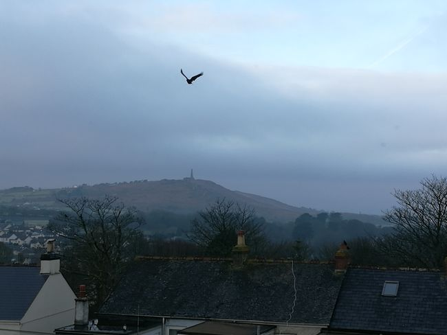 Flying No People Sky Bird Morning Sky Carn Brea