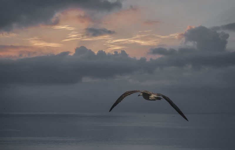 Cloudy Flight Of The Gull Gull Sea