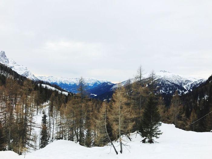Frozen trees on mountain against sky