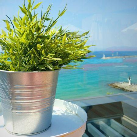 Kusadasi Turkey Plant Water Sky Docks Holiday Vacations Close-up Sunny Day