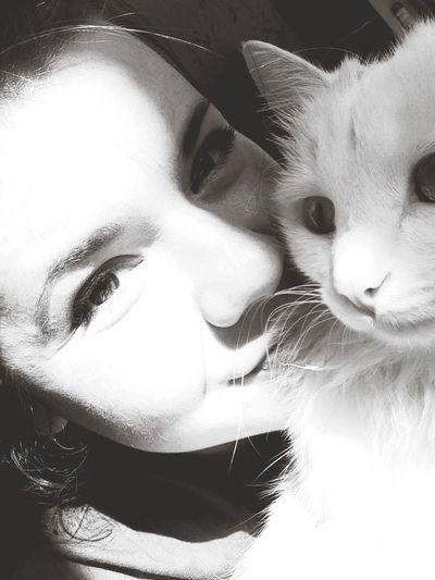 Sunlight Garlandcat Cat Pet Blackandwhite Spring Mypet Whitecat