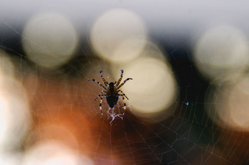 Animal Leg Animal Themes Animal Wildlife Animals In The Wild Bokeh Close-up Day Focus On Foreground Fragility Insect Nature No People One Animal Outdoors Spider Spider Web Web The Week On EyeEm