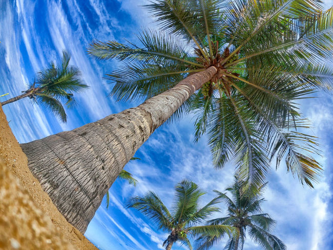 Brazil HDR Beauty In Nature Cloud - Sky Coconut Palm Tree Day Directly Below Gopro Growth Leaf Low Angle View Nature No People Outdoors Palm Leaf Palm Tree Plant Sky Tall - High Tranquility Tree Tree Trunk Tropical Climate Tropical Tree Trunk