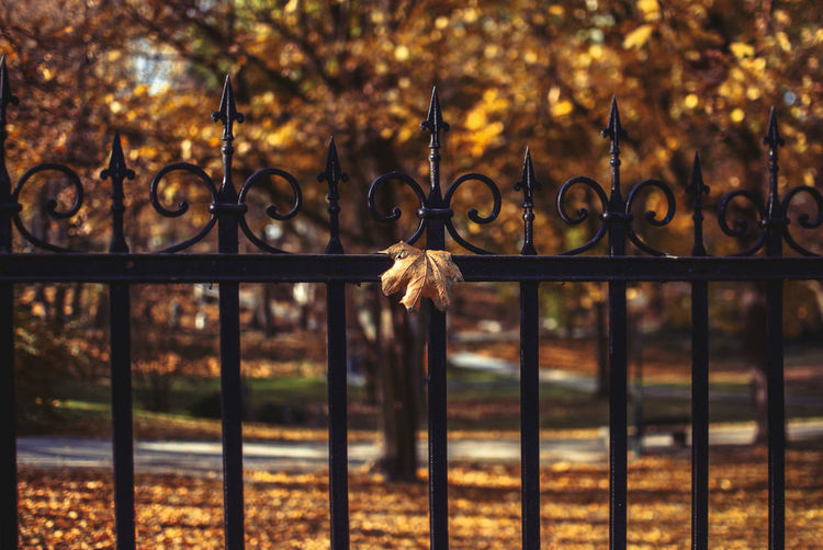 Close-up of metal gate against trees during autumn