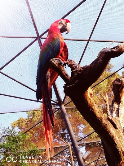 Low Angle View Bird Pets One Animal Nature Animals In The Wild Animal Themes Protection Animals In Captivity Zoo Animals  Zoophotography Beauty In Nature Birdcage Red Color Paraba