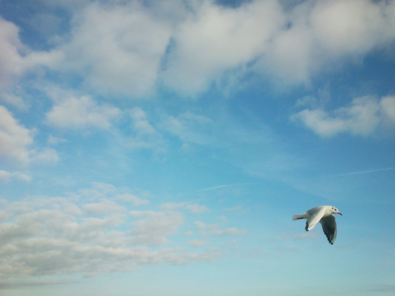 flying, bird, cloud - sky, animal themes, sky, animals in the wild, one animal, spread wings, mid-air, low angle view, seagull, nature, animal wildlife, day, motion, beauty in nature, no people, outdoors