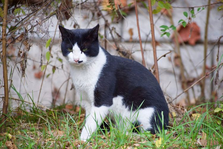 Animal Themes Close-up Day Domestic Animals Domestic Cat Feline Full Length Grass Mammal Nature No People One Animal Outdoors Pets Plant