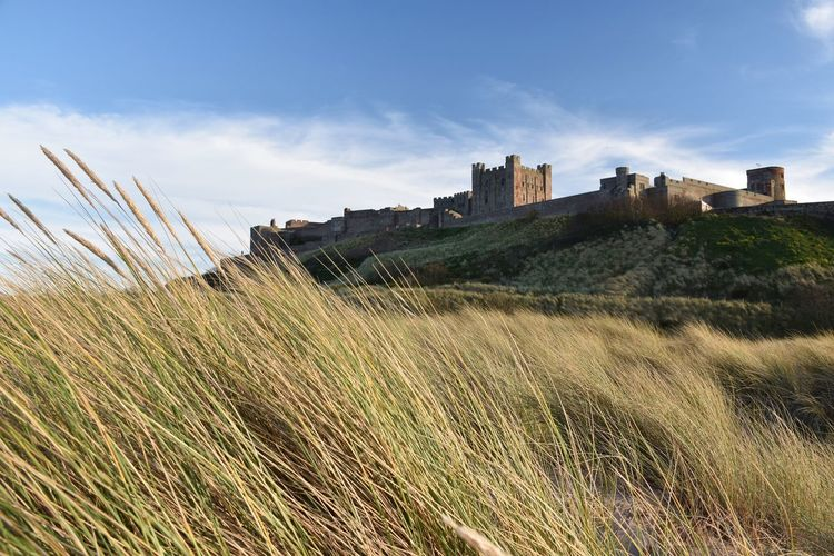 Looking up at Bamburgh Castle from the dunes below Sky Plant Built Structure Grass Architecture Land Nature Building Exterior Field Cloud - Sky Landscape Growth History Day No People Building The Past Environment Beauty In Nature Outdoors Timothy Grass Blue Sky Grass Marram Grass Focus On Foreground Castle Bamburgh Bamburghcastle Lookingup View From Below Historic Historical Building Fortification