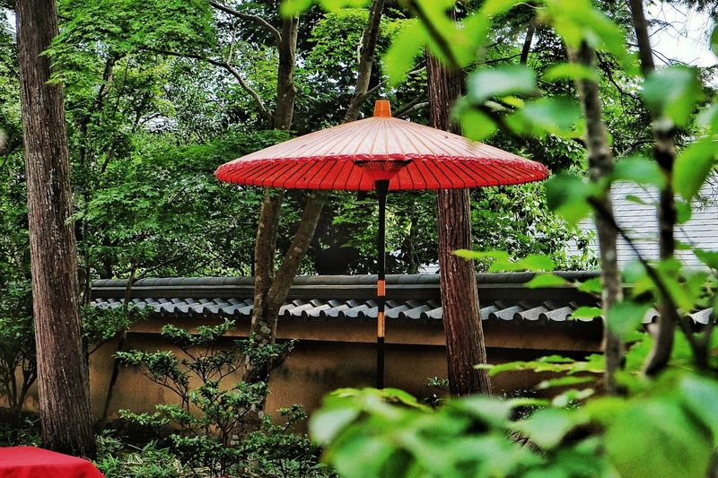 Japanese Architecture Japanese Style Japanese Traditional Kyoto, Japan Outdoors Green Color Day Red Sky Built Structure