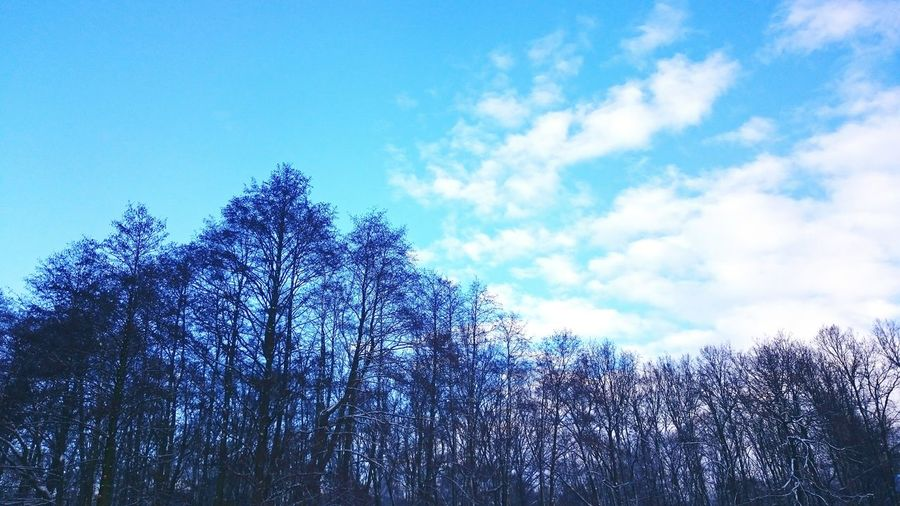 Beautiful Surroundings View Work From My Point Of View Taking Photos Wintersky Z3compact Enjoying Life Winter Forest Landscapes With WhiteWall