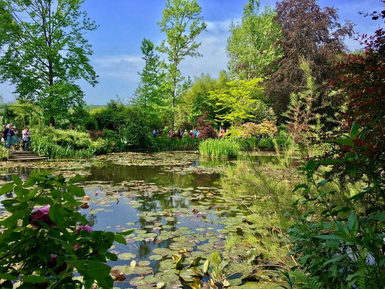 Monet Garden Waterlilies Fresh On Eyeem  Tree Water Park - Man Made Space Reflection Flower Large Group Of People Pond Tranquility Growth Green Color Beauty In Nature Formal Garden Water Lily Tranquil Scene Park Scenics Nature Freshness Garden Fragility