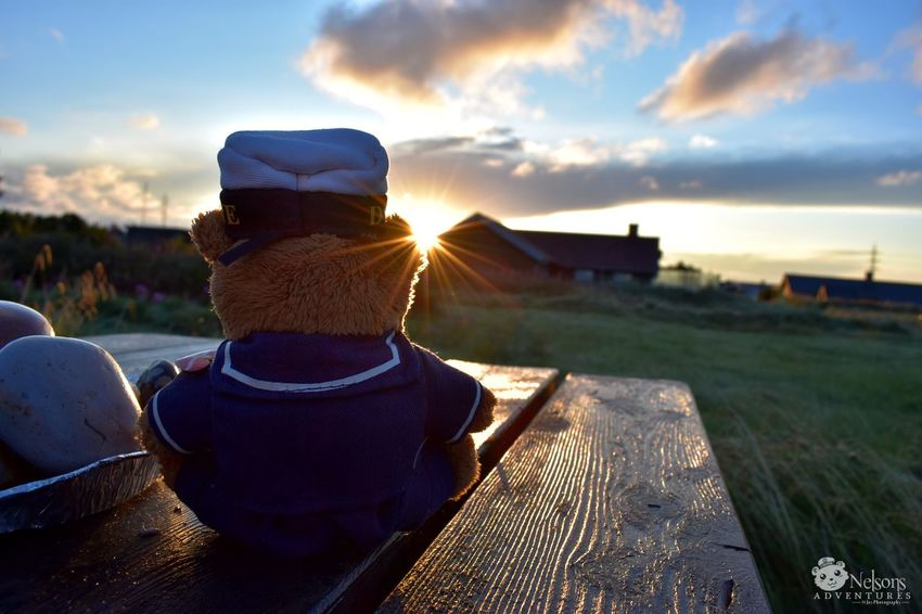 Nelson watches the sunrise NelsonsAdventures Teddy Teddy Bear Teddybear Stuffed Toy Rear View Sunrise Nature Nature_collection EyeEm Masterclass EyeEm Nature Lover Denmark Denmark 🇩🇰 Multi Colored Sun Summer Nikon Nørre Lyngvig Morning Sky Morning Naturelovers Close-up Sky Shiny Sunrays