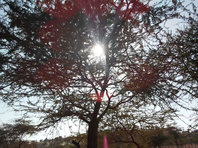 Tree Landscape_photography Colourful Rajasthan Trees Desert Landscape Desrt Scenes Low Angle View Day Branch Growth Sunlight Outdoors No People Beauty In Nature The Graphic City