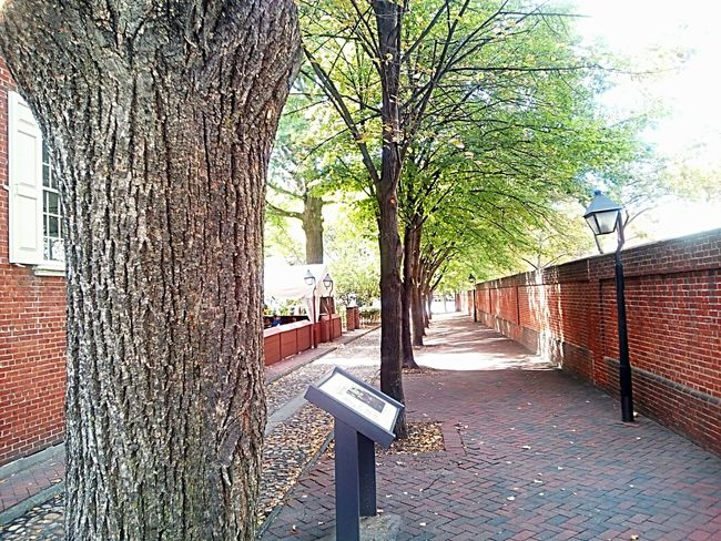 No People Outdoors Autumn Pathway Path Historical Place Cobblestone Street Trees Trees In A Row Row Of Trees