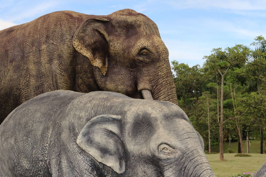 Animal Body Part Animal Head  Close-up Day Focus On Foreground Gorilla Mammal Nature No People Outdoors Part Of Portrait Sky Tree Elephants