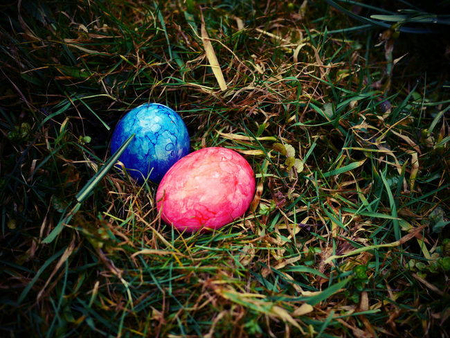 Abundance Backgrounds Beginnings Close Up Close-up Detail Easter Easter Eggs Easter Hunt Focus On Foreground Full Frame Grass Green Green Color Growing Hunt Large Group Of Objects Leaf New Life No People Organic Red Ripe Selective Focus