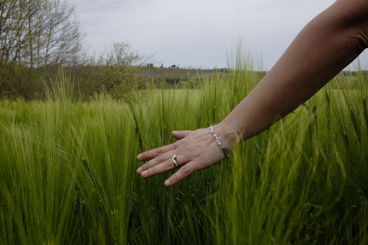 the woman's hand touches the grain Human Hand Hand Plant Field Real People Grass Land Human Body Part Lifestyles Landscape One Person Growth Nature Finger Human Finger Rural Scene Unrecognizable Person Leisure Activity Green Color Body Part Outdoors Wedding Ring Diamond Cereal Plant