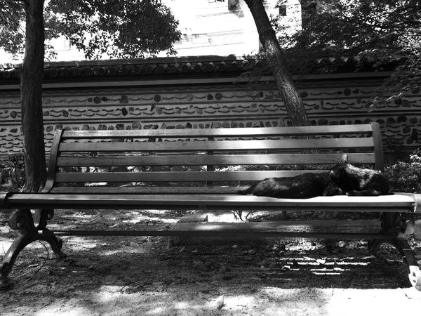 black & white version Bench Blackandwhite Cat Enjoying Life Eye4photography  EyeEm Black&white! EyeEm Gallery Hello World IPhone IPhoneography No People Relaxing Relaxing Moments Sunny Day Taking Photos Tranquility Tree Monochrome