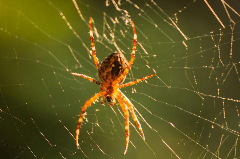 SONY DSC Spider
