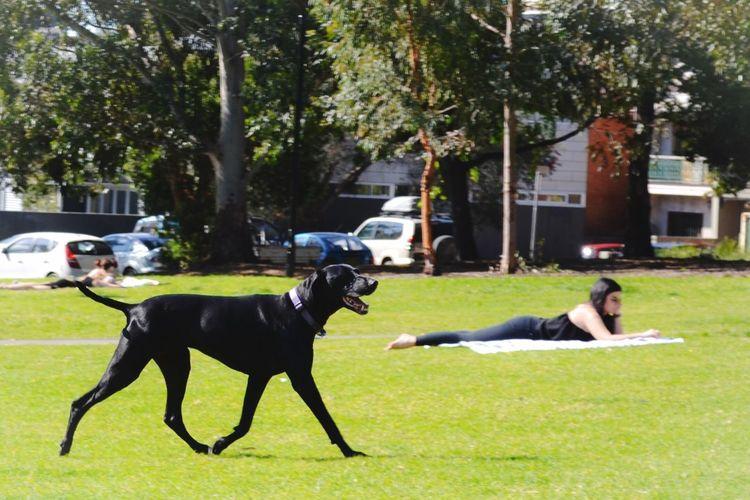 Black Dog Park My Year My View