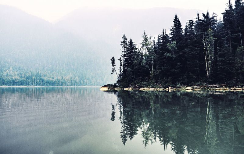 Tree Reflection Water Tranquility Beauty In Nature Tranquil Scene Scenics - Nature Waterfront Plant Nature Idyllic Forest No People Fog Outdoors
