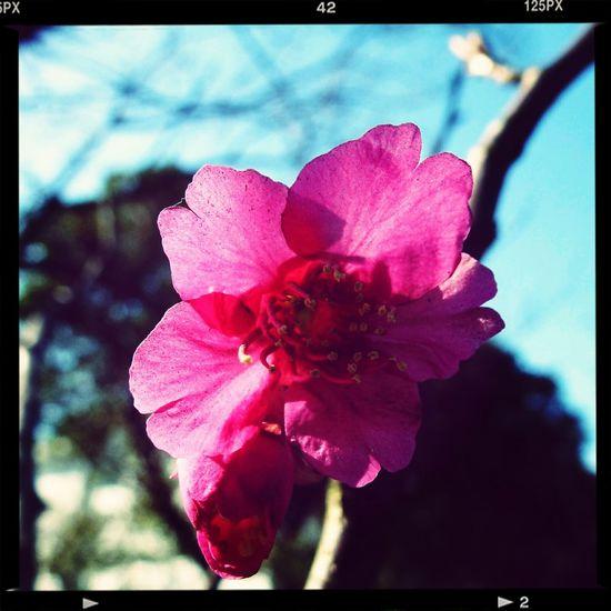 Kirschblüte First Eyeem Photo