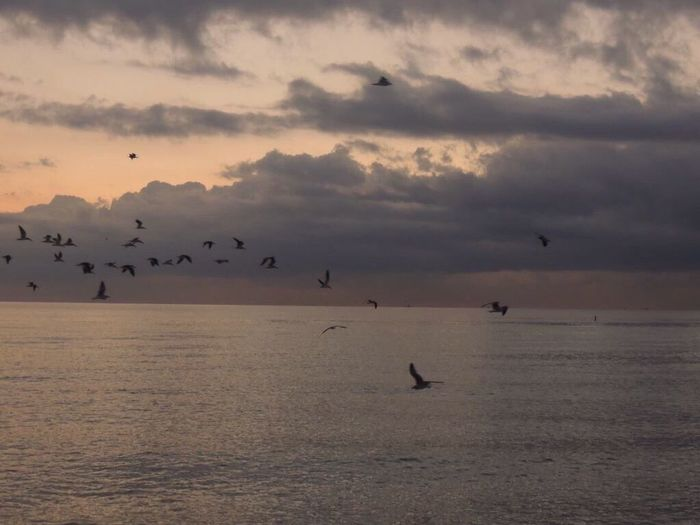 Good Morning Beach Photography Life Is A Beach Beautiful Sunrise Birds Flying Low Flock Of Birds Freedom Pastel Colors Sky And Clouds Sea Beauty In Nature I Love The Sea I Love The Simple Things In Life