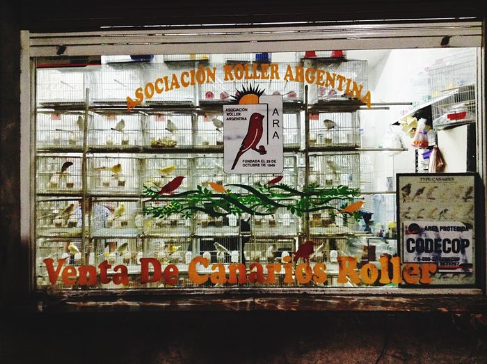 Streetphotography Streetphoto_color Window Bird Freedom Typography Letters Colors Bird On Sale 😪
