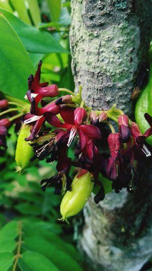 pistil Pistil Fruit Food Sour Fruit Leaf Tree Red Close-up Green Color Plant