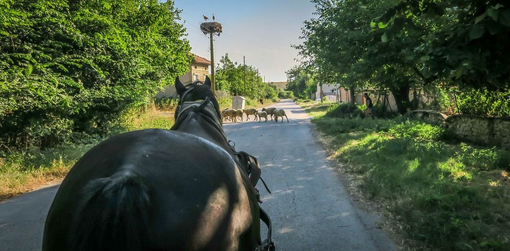 Village Photography Horse