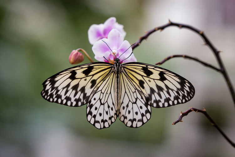 Beautiful Butterfly against blurred background Contemplation Copy Space Orchid Orchids Animal Wildlife Animal Wing Beauty In Nature Butterfly Butterfly - Insect Close-up Colorful Copy Space In Sky Flower Head Flowering Plant Fragility Growth Insect Invertebrate No People One Animal Petal Plant Pollination Rainforest Vulnerability