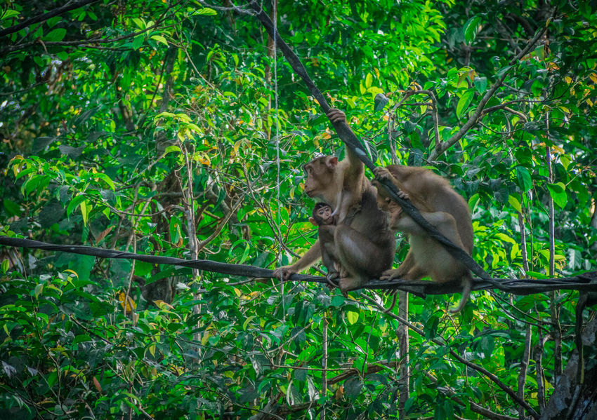 Animal Wildlife Animals In The Wild Family❤ Forest Forest Trees Kinabatangan River Monkey Outdoors